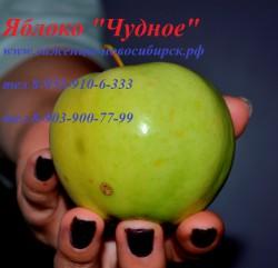 """Яблоня""""ЧУДНОЕ"""" на карликовом подвое"""
