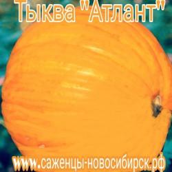 """Тыква крупноплодная """"Атлант"""""""
