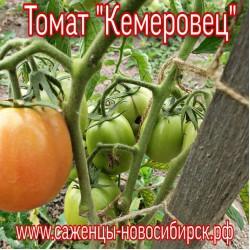 "Томат ""Кемеровец"""