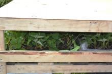 Плотно закрываем ящик с рассадой земляники