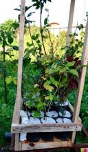 Агроперлит поможет сохранить влагу  для растений