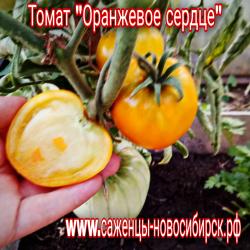 """Томат """"Оранжевое сердце"""""""