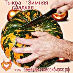"""Семена тыквы сорта """"ЗИМНЯЯ СЛАДКАЯ"""""""