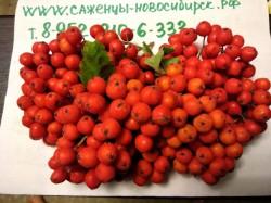 Рябина Невеженская