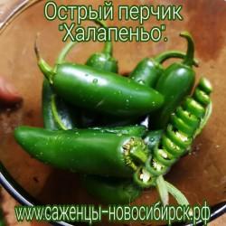 "Перчик острый ""Халапеньо"""