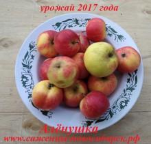 """Яблочки """"Алёнушка"""""""