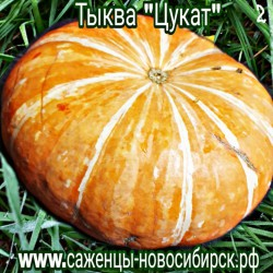 """Тыква крупноплодная """"Цукат"""""""