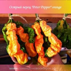 """Перец острый """"Peter Pepper"""" оранжевый"""