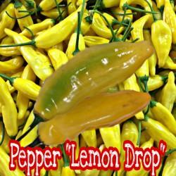 Lemon Drop pepper (Острый перец Лемон Дроп)