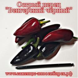 """Семена острого перца сорта """"Венгерский чёрный"""""""